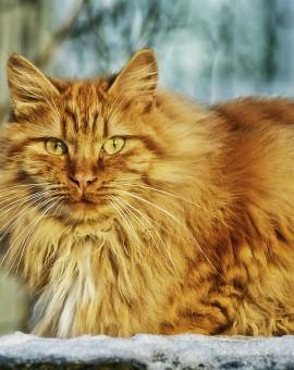 Hygiène et soins chats