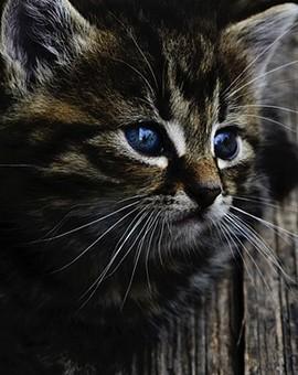 Produits adaptés pour les chats